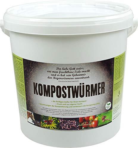 KOMPOSTWÜRMER | natursache.de | Regenwürmer lebend kaufen - effektive Kompostierung von...