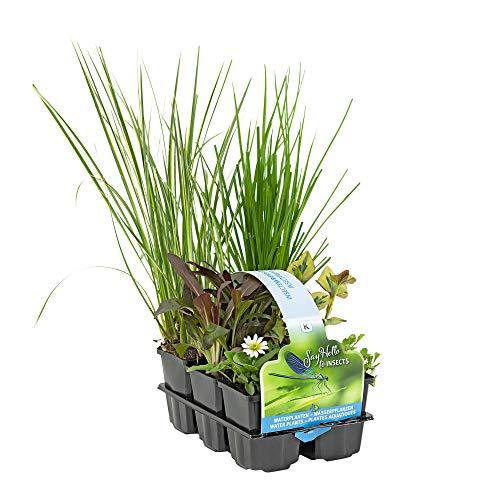 6x Insektenfreundliche Teichpflanzen winterhart   Wasserpflanzen Teich   Garten Teich  ...
