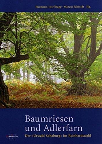 Baumriesen und Adlerfarn: Der 'Urwald Sababurg' im Reinhardswald