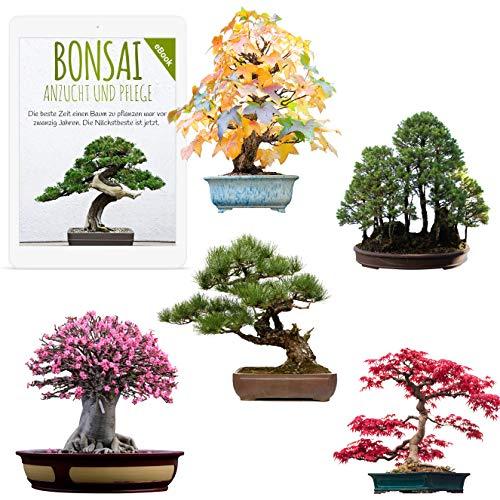 Außergewöhnliche Bonsai Samen mit hoher Keimrate - Pflanzen Samen Set für deinen...