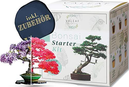 valeaf Bonsai Starter Kit - SUMMER SALE - Züchten Sie Ihren eigenen Bonsai Baum -...