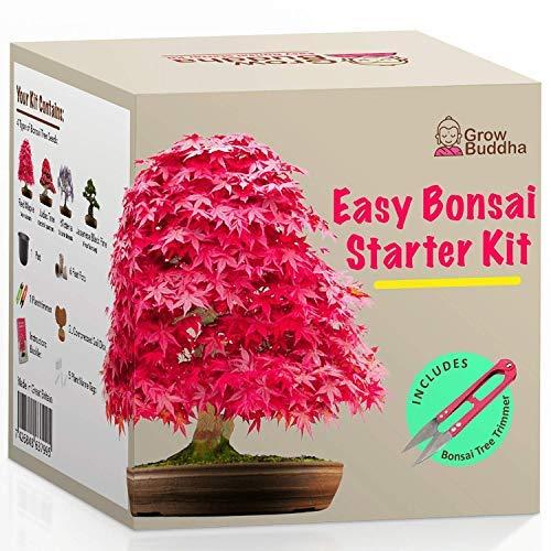 Züchte dein eigenes Bonsai - Züchte einfach 4 Arten von Bonsai-Bäumen mit unserem...