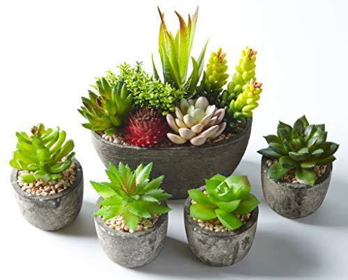 Jobary Set mit 5 künstlichen Sukkulenten mit Töpfen (einschließlich 10 Pflanzen),...