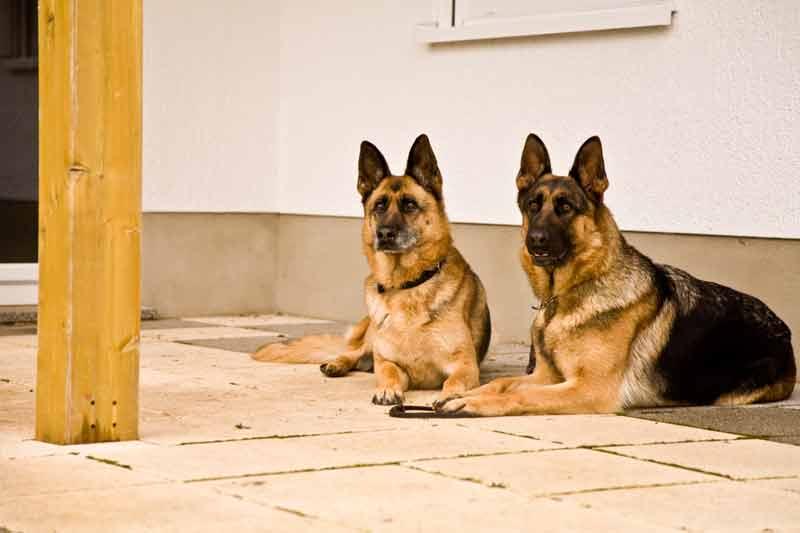 Nachbarn: Hundsgemeine Angelegenheit