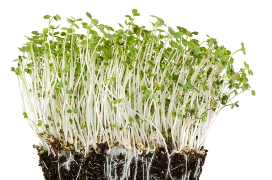 Bewurzelung Pflanzenwachstum scaled