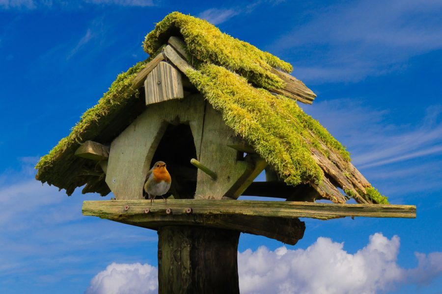 Ein Vogelhaus selber bauen, der Spaß für die ganze Familie.