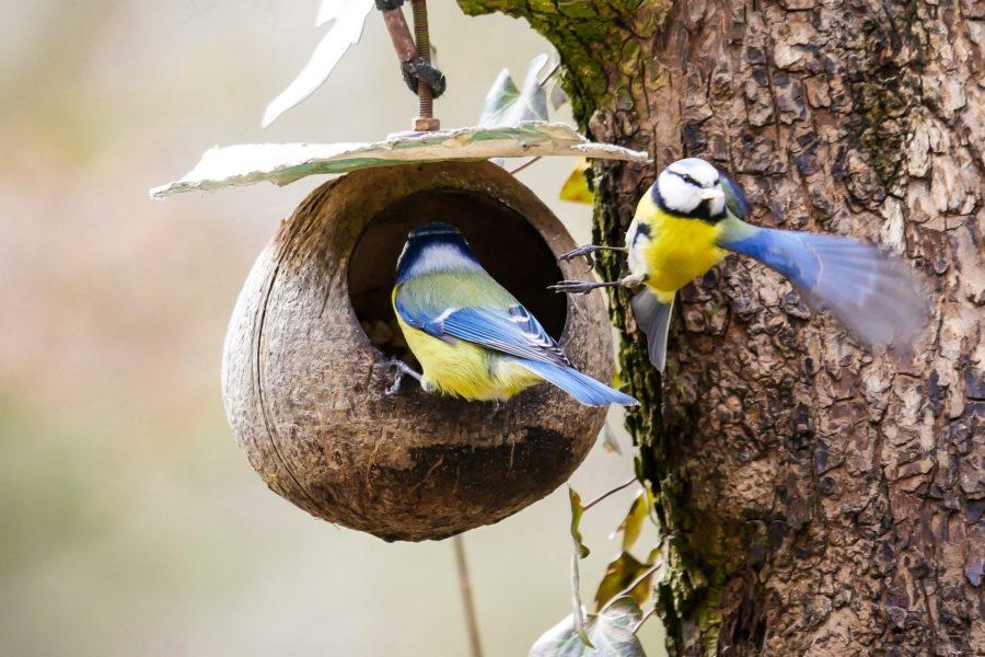Einen Nistkasten für Vögel selber bauen.