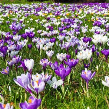 Checkliste: 8 wichtige Gartentipps für den Frühling