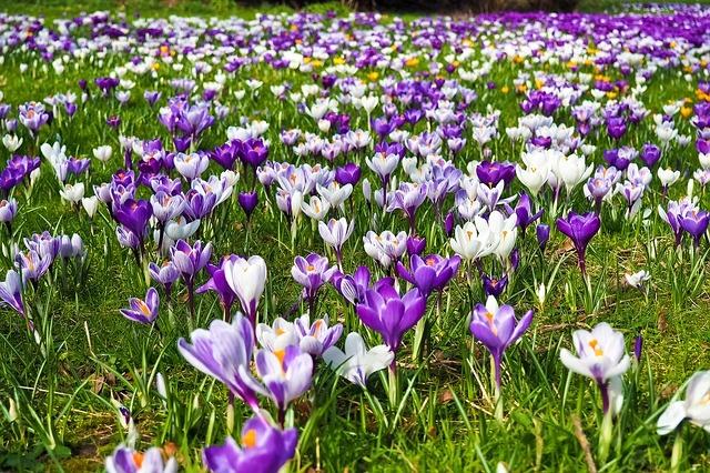 Gartentipps Frühling