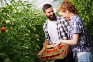 Im eigenen Gewächshaus Obst und Gemüse anbauen.