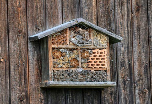 Natur hautnah: Insektenhotel für Kinder bauen