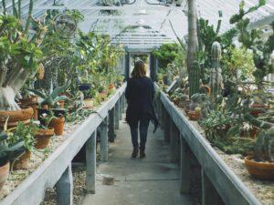 Kakteen sind mediterrane Pflanzen, die Sie winterfest machen sollten