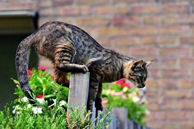 Katzen im Garten Was tun