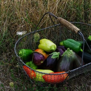 Nutzgarten anlegen und eigenen Gemüsebedarf und Obstbedarf decken
