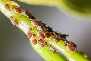Schädlinge im Garten können den Nutzpflanzen arg zusetzen.