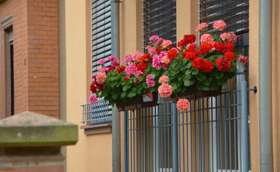 So machen Sie Ihre Balkonpflanzen winterfest.