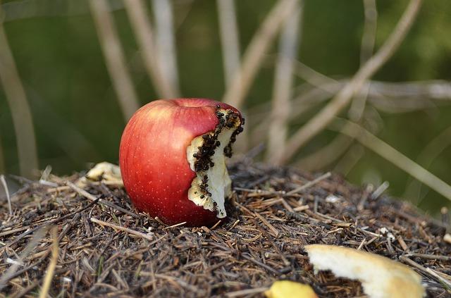 So wird man auf natürlich Weise Ameisen im Garten wieder los.