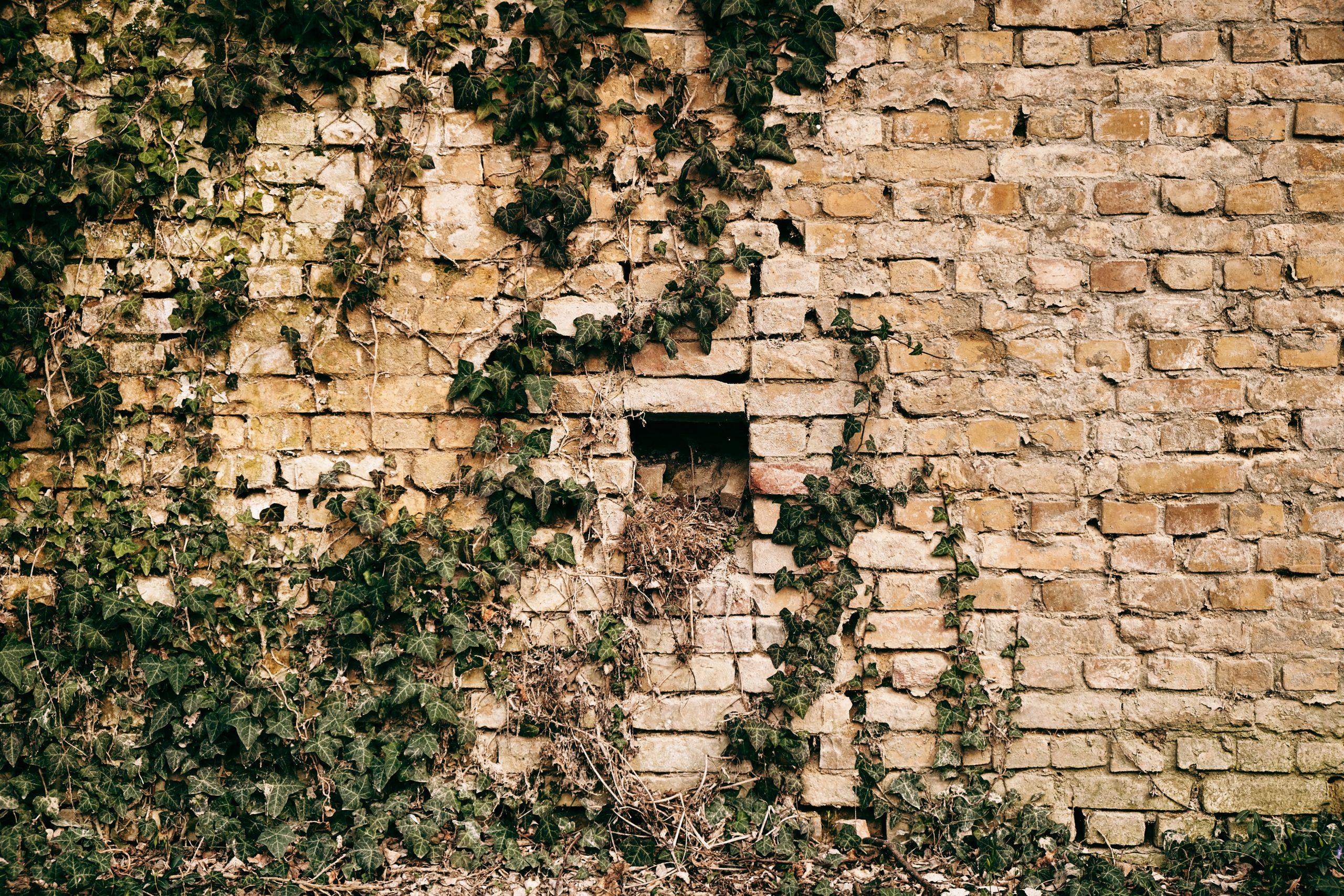 Um eine Gartenmauer zu reinigen, hat man unterschiedliche Möglichkeiten zur Auswahl. Foto: linux87 via Envato