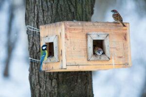 Vögel im Winter richtig füttern. Das ist zu beachten.