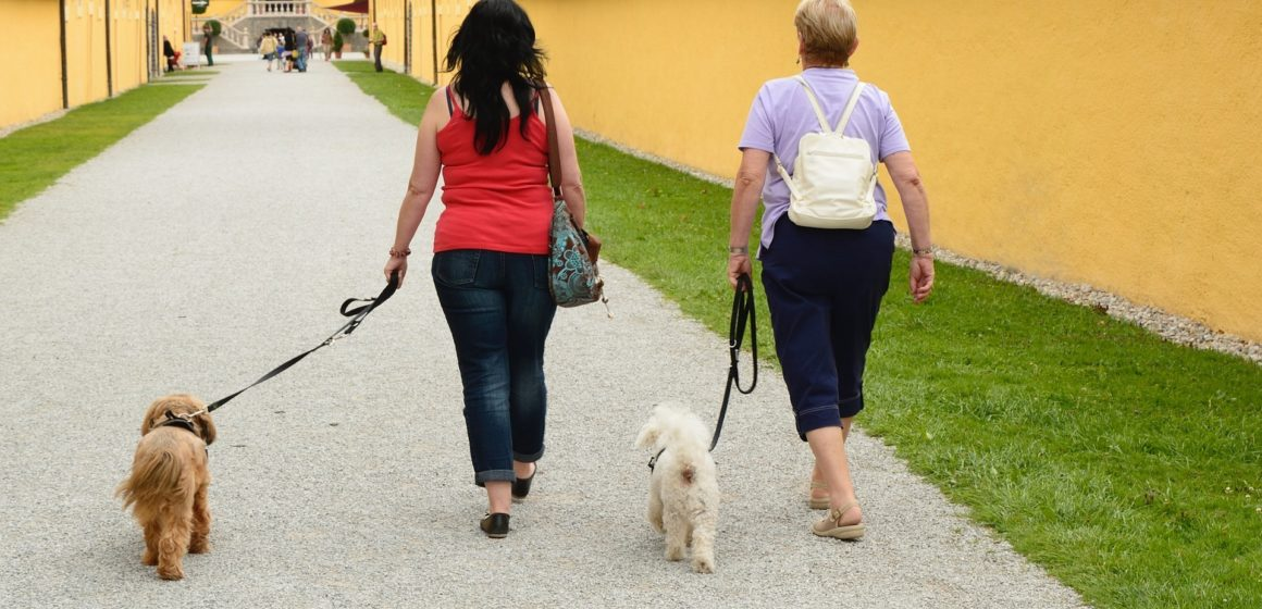 Haushaltsnahe Dienstleistung: So können Hundehalter Steuern sparen