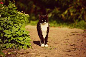 wub Katze Freigänger