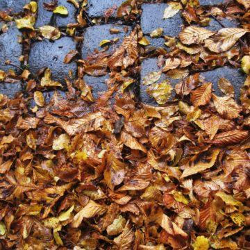 Herbstlaub auf dem Gehweg: Wer nach einem Unfall haften muss