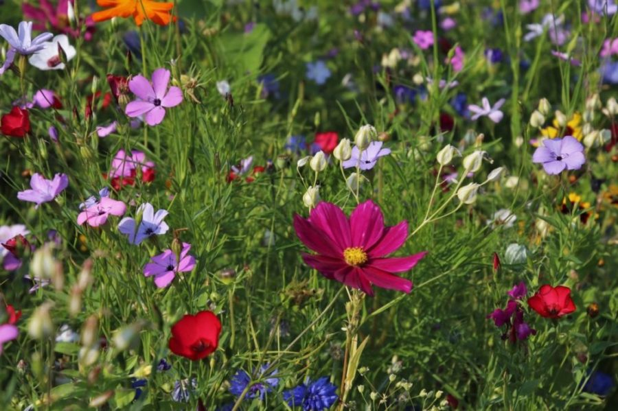 wub wildblumen